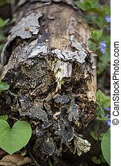 piante, chiudere, albero, su, fungo, verde, tronco, crescente, fresco