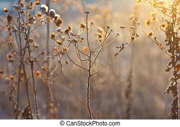 piante, congelato, wintertime, prato, controluce