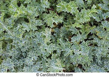 piante, dettaglio