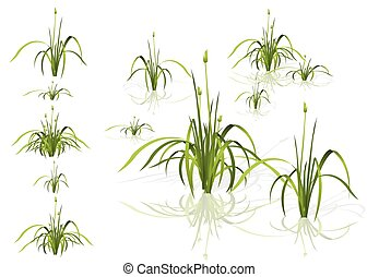 piante, differente, isolato, acqua, vettore, shadows., varianti, reed.