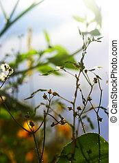 piante, e, foglie