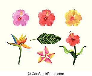 piante, esotico, set, foglia, fiori tropicali