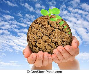 piante, evoluzione, concetto, pianeta, bruciato, crescente, mani, fuori