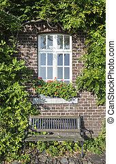 piante, fattoria, vecchio, verde, parete