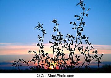 piante, fiore, silhouette, sole, contro, regolazione