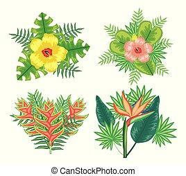 piante, fiori tropicali, set, mette foglie