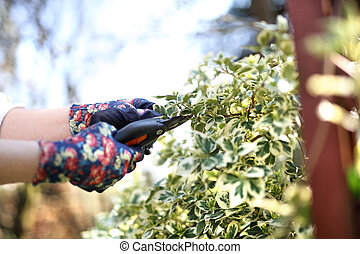 piante, garden., gardening., cura