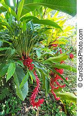 piante, honduras