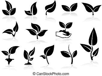 piante, icone, set