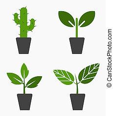 piante, in, otri