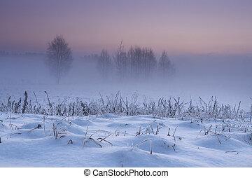piante, naturale, inverno, nevoso, dicembre, chiaro, natura, hoarfrost., albero, presto, fondo., morning., nebbioso, coperto, gelido, sky., natale, paesaggio, dawn.