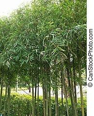piante, ornamentale, strabiliante, giardino