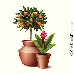 piante, otri