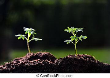 piante, pianta, destra, luce, fuoco, giovane, mattina
