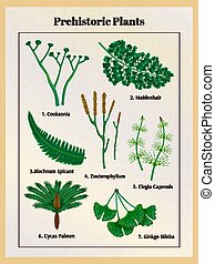 piante, preistorico, set, botanico
