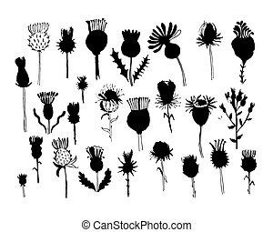 piante, schizzo, collezione, disegno, agrimony, tuo