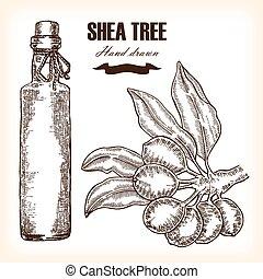 piante, schizzo, shea, medico, albero, illustrazione, mano, vettore, ramo, disegnato, butter., style.