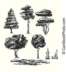 piante, schizzo
