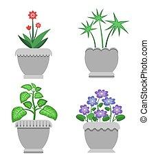 piante, set, ceramica, otri, interno, fiori