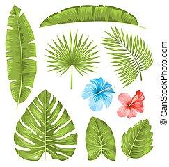 piante, set, isolato, collezione, foglie, tropicale
