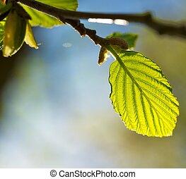 piante, sopra, sfocato, sfondo verde, astratto