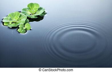 piante, su, acqua, con, increspature