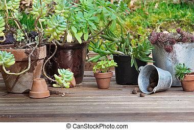 piante, succulento, vaso