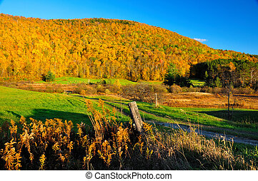 pic, feuillage, automne