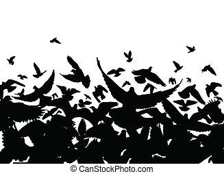 piccione, volo