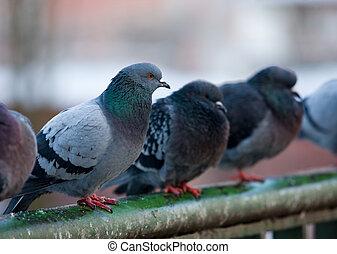 piccioni, railings