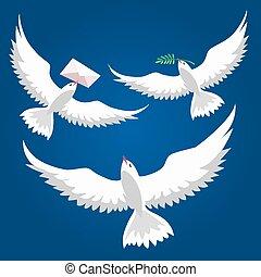 piccioni, volare, set