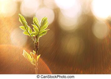 piccolo albero, tramonto