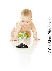 piccolo, bambino, pianta verde, isolato