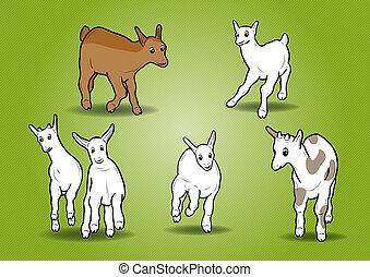 piccolo, capre