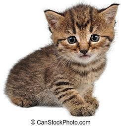piccolo, dall'aspetto, macchina fotografica, gattino