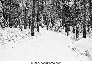 piccolo, foresta, strada, nevoso