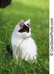 piccolo, gattino, seduta, in, il, erba