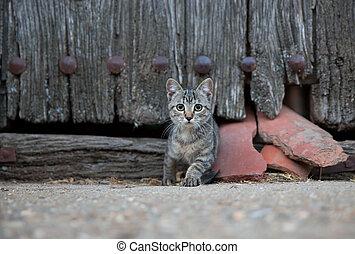 piccolo, gatto