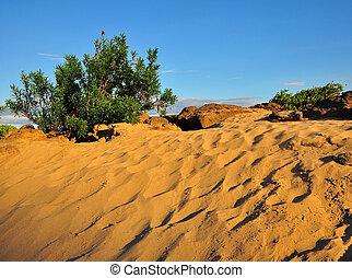 piccolo, piante, deserto, arbusto
