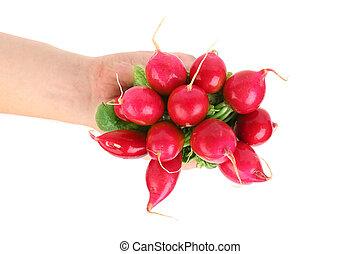 piccolo, prese, radish., giardino, mano