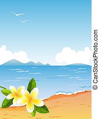 piccolo, tropico, spiaggia, ramo, frangiapani