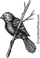 piccolo, uccello, ramo