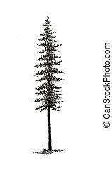 picea, -, árbol, b&w, negro
