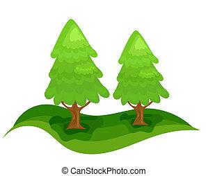 picea, árboles