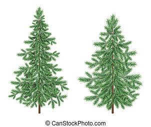 picea, abeto, verde, árboles de navidad