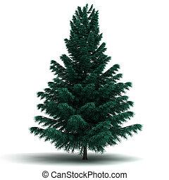 picea, solo, árbol, pino