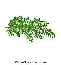 picea, vector, árbol, navidad, rama