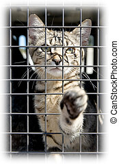Pick Me - An orphaned kitten in a cage reaching out with a...