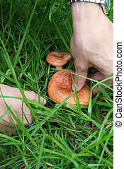 Pick mushrooms closeup