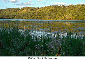 Pickerel Lake and Forest